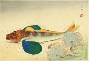大野麦風「大日本魚類画集 ホオボオ」