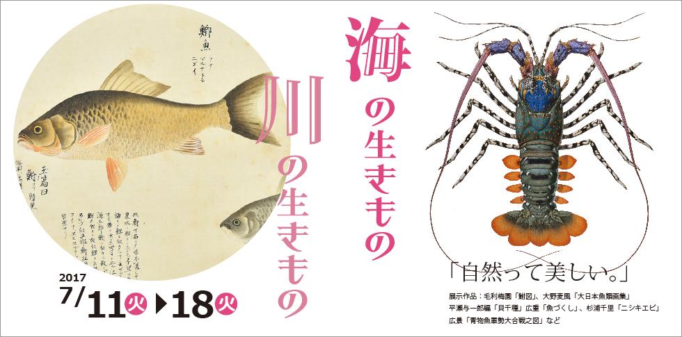 「自然って美しい。」<br /> 日本人の生活にとって深い関わりのある海や川の生き物は、昔から掛け軸や浮世絵にも描かれています。写真を凌駕するかのような細密な杉浦千里の博物画も展示。描かれた造形美をお楽しみ下さい。
