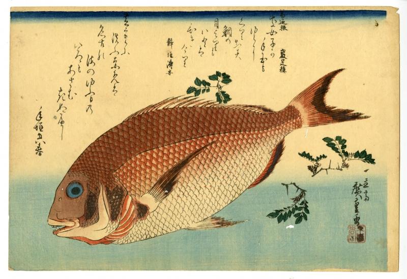 広重「魚づくし 鯛に山椒」 価格 300,000円(税込)