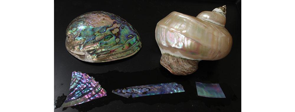 真珠層を持つ 鮑貝、夜光貝、白蝶貝などが使われる。
