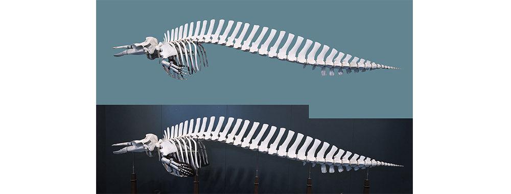 クジラの骨の写真素材は、「カタルシスの浜 静止する時間」の上部に羽ばたく鳥に使用されている